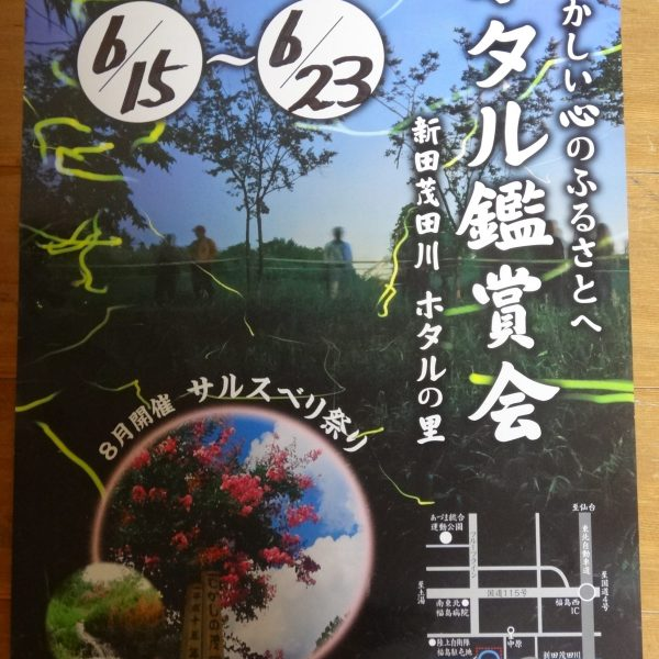 福島市の一大ホタルスポット「新田茂田川(しんでんもだがわ)ホタルの里」でホタルの乱舞を観賞しよう!の画像
